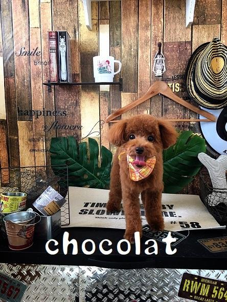 chocolat 板谷