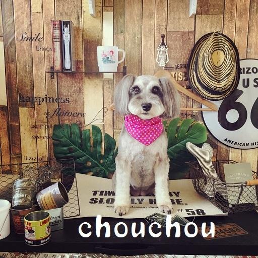 chouchou 中桐