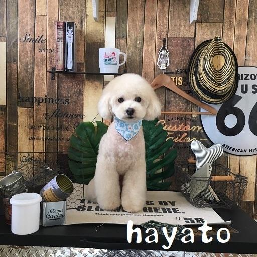 hayato 浅村