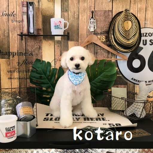 kotato 岡崎