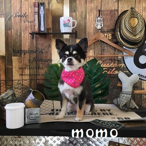momo 原田