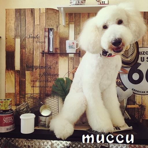 muccu 桐畑