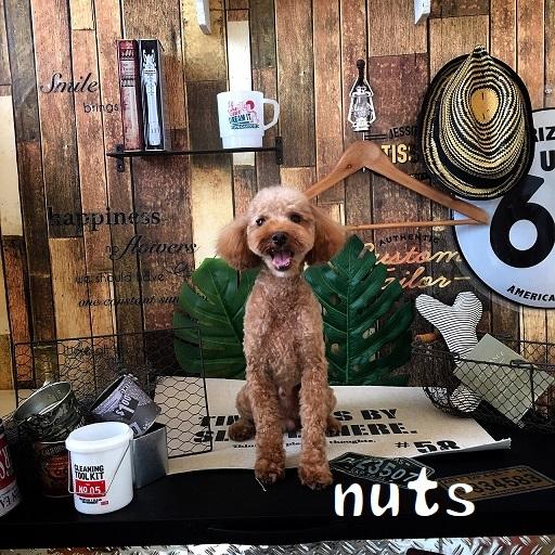 nuts 北條