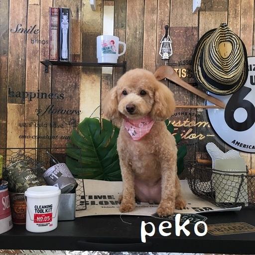 peco 山下