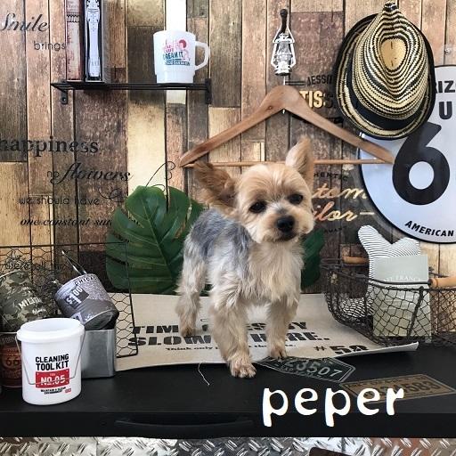 peper 洪