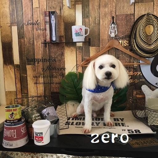 zero 羽原