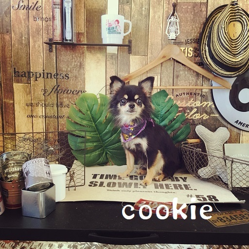 cookie 木村