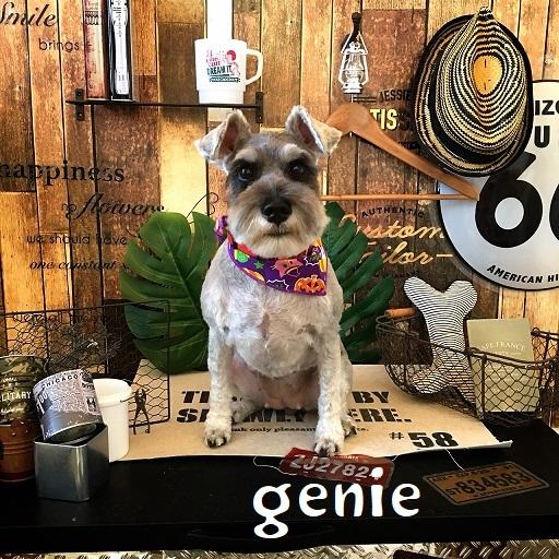 genie 内田