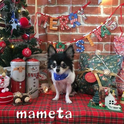 mameta 内田