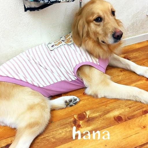 hana 田中