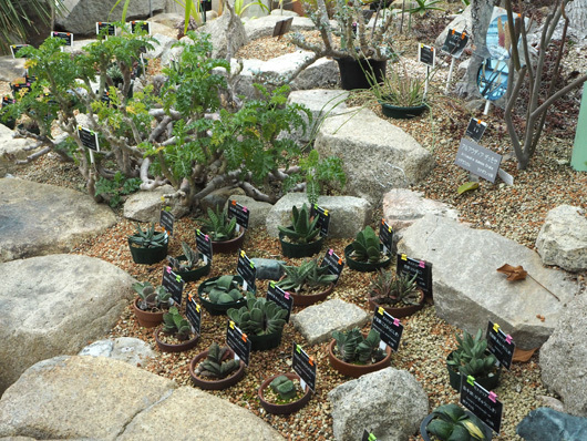 広島植物公園5
