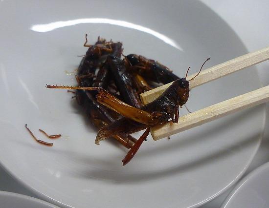 2017.10.22昆虫食3
