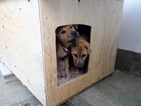 2017.12.03犬小屋の作成3