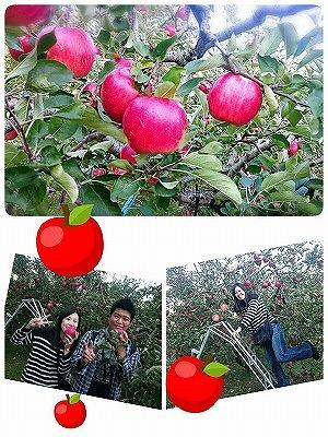 リンゴ狩り20171105 (3)