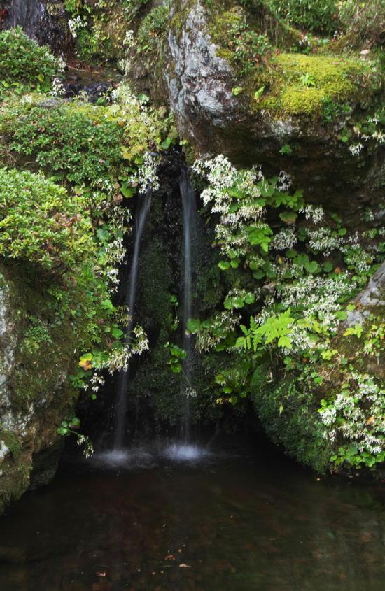 竜頭の滝-795