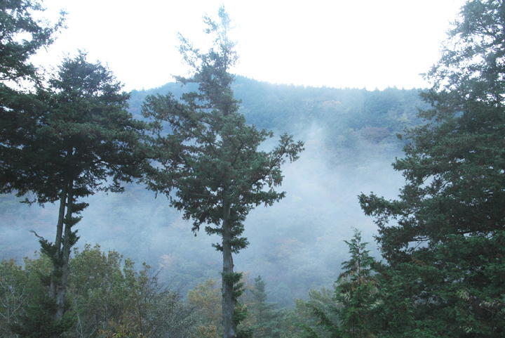 霧の朝-847