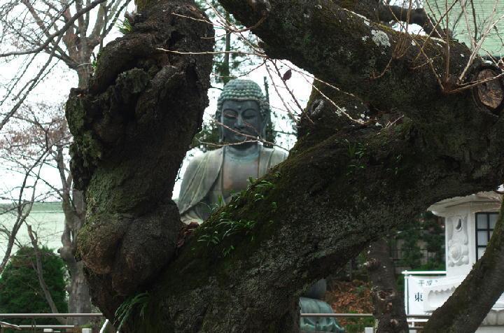 法華経寺-988
