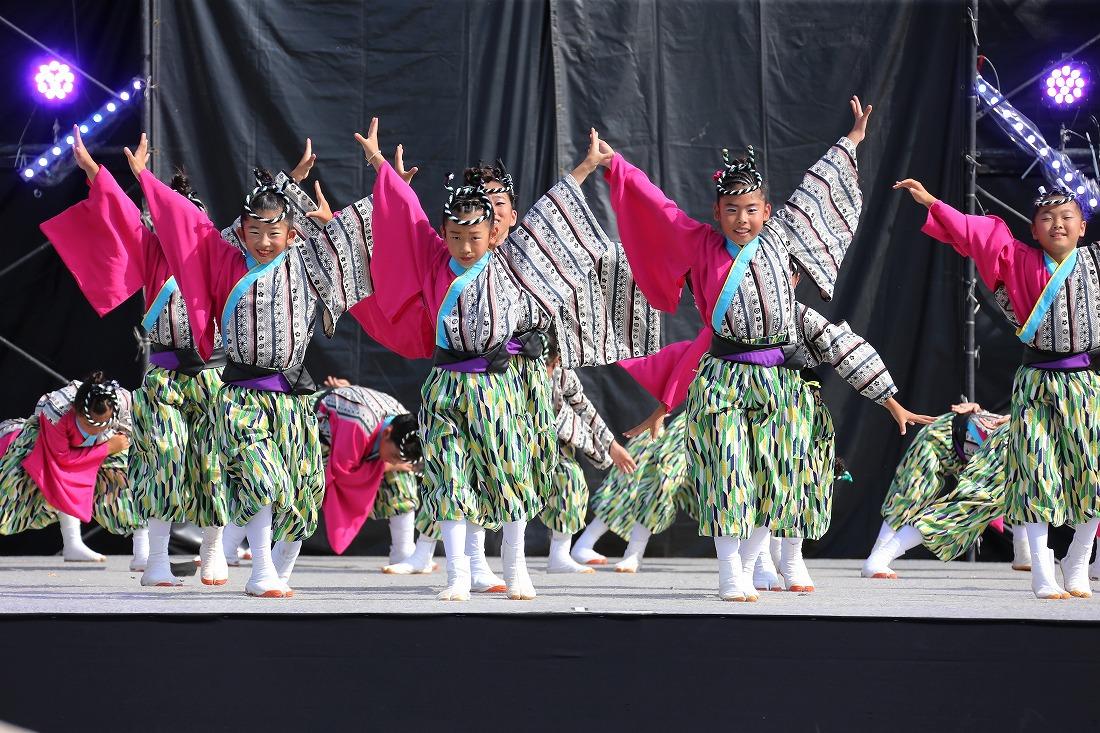 koiyamain17sakura 33