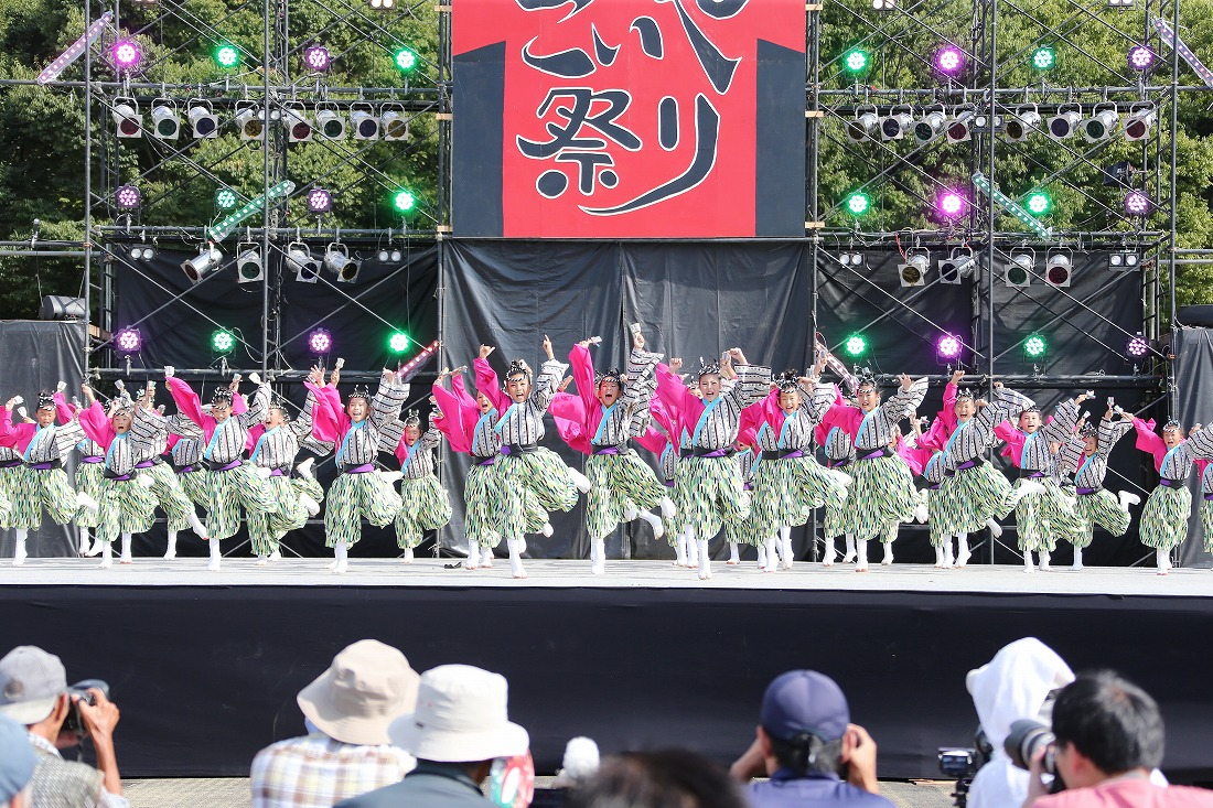 koiyamain17sakura 50