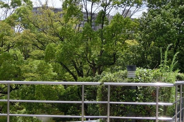 公園 CIMG4918