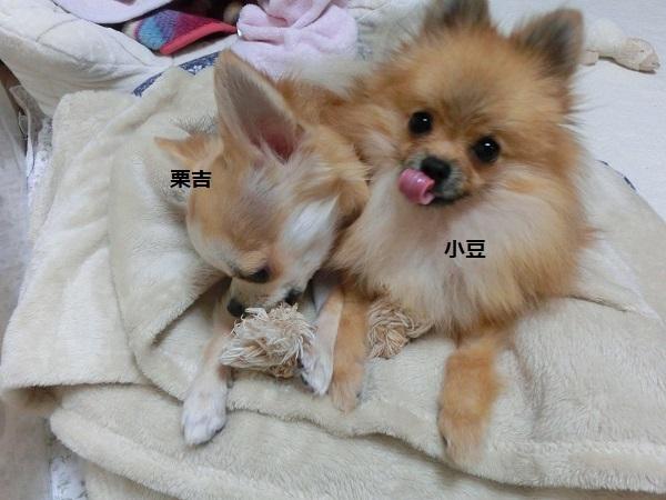 栗吉&あずき CIMG5649