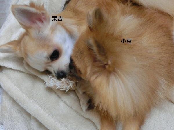 栗吉&小豆 CIMG5646