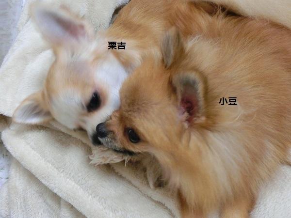 栗吉&小豆 CIMG5647