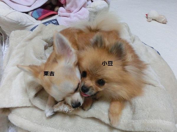 栗吉&小豆 CIMG5650