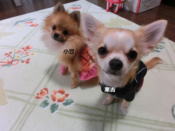 栗吉&小豆