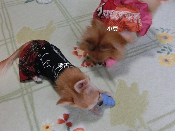 栗吉&小豆 CIMG5665