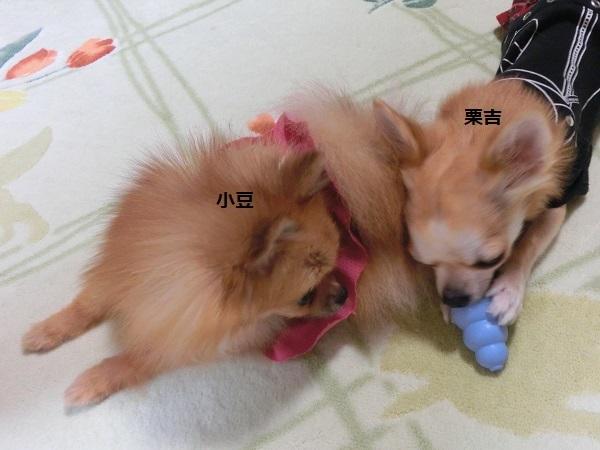 小豆&栗吉 CIMG5669