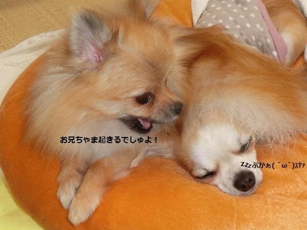 栗吉&小豆 2 CIMG5780