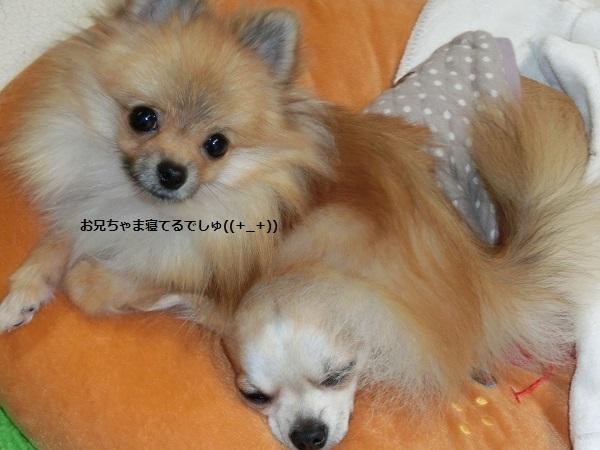 栗吉&小豆 2 CIMG5782