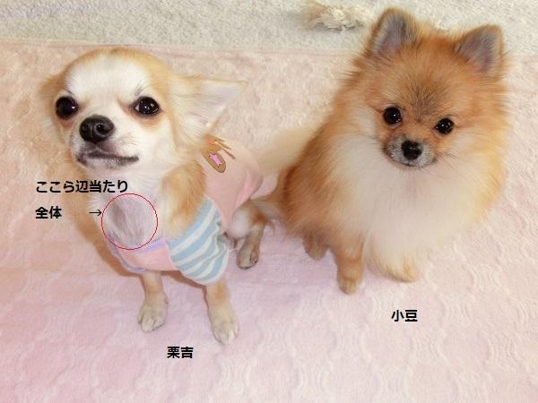 栗吉&小豆シャンプー後 CIMG5851