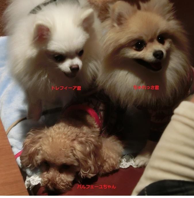 3ワンちゃん達 CIMG5881