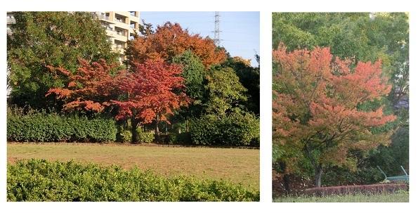 公園の紅葉 CIMG6013