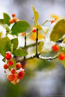 s-雪降る年の瀬