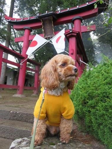 IMG_2999秋祭り