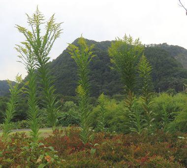 IMG_3471緑地公園