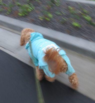 IMG_3884雨散歩