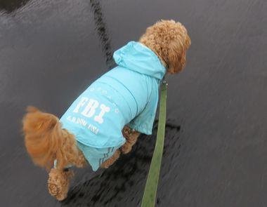 IMG_3990雨散歩