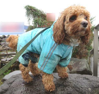 IMG_3992雨散歩