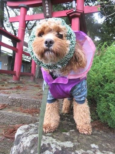 IMG_4011台風散歩