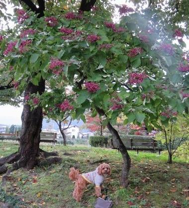 IMG_4141公園
