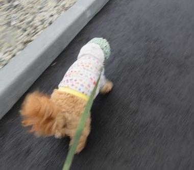 IMG_4192朝散歩