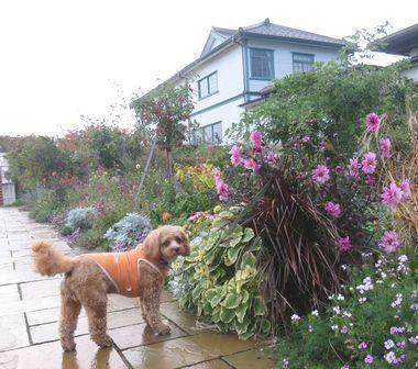 IMG_4393霧雨散歩