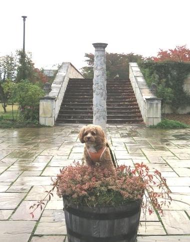 IMG_4395霧雨散歩