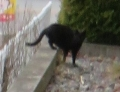 IMG_4525黒猫