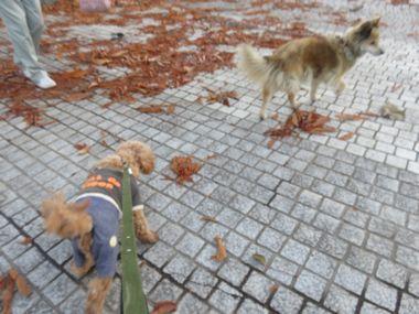IMG_4603ミックス犬