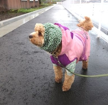 IMG_4636小雨散歩